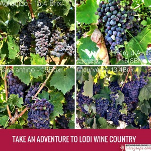 Instagram Post _Take an Adventure to Lodi Wine Country