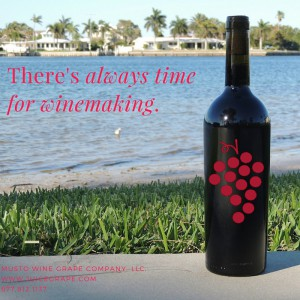 there is always time for winemaking