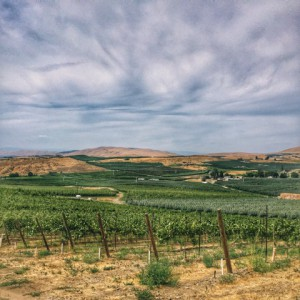 wa state_vineyard view