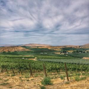wa state_vineyard view