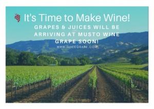 Time to Make Wine photo