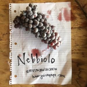 FullSizeRender (005)_Nebbiolo