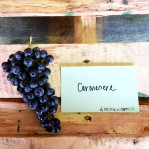 musto wine grape chilean carmenere grapes for winemaking for wineries and home winemakers