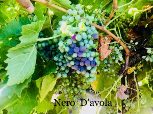 Nero D'avola_Italian California Wine Grapes_Musto Wine Grape_Winemaking