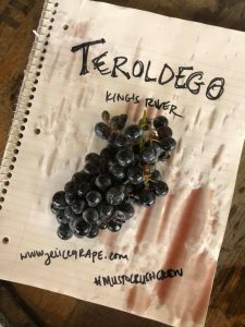 Teroldego grape_Musto Wine Grape_Winemaking_Winemaker_Home Winemaking_How to Make Wine