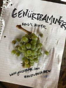 Musto Wine Grape_How to make wine_Gewurztraminer_winemaking