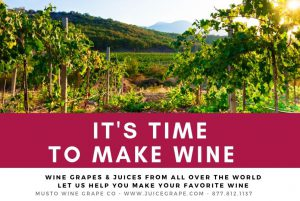 winemaking-home winemaking-how to make wine-musto wine grape