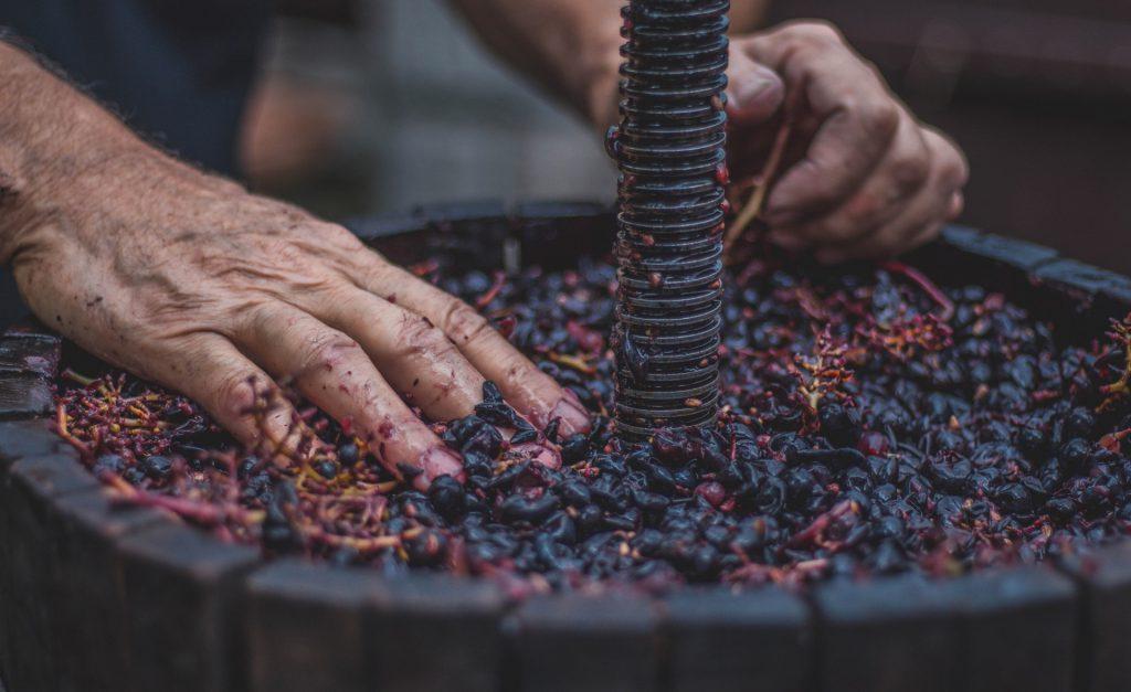 pressing wine grapes