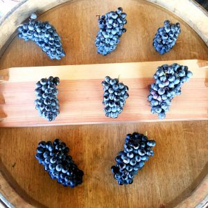 wine grapes_pinotage_south african_winemaking_how to make wine