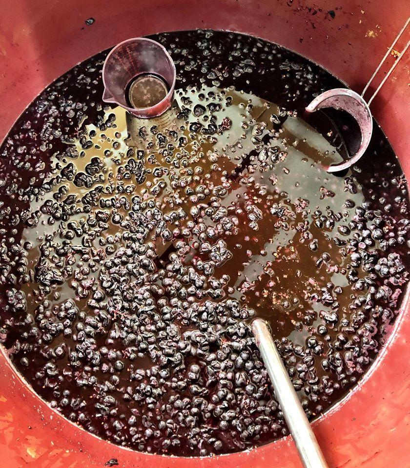 winemaking-wine must-how to make wine-winemaking instructions-musto wine grape