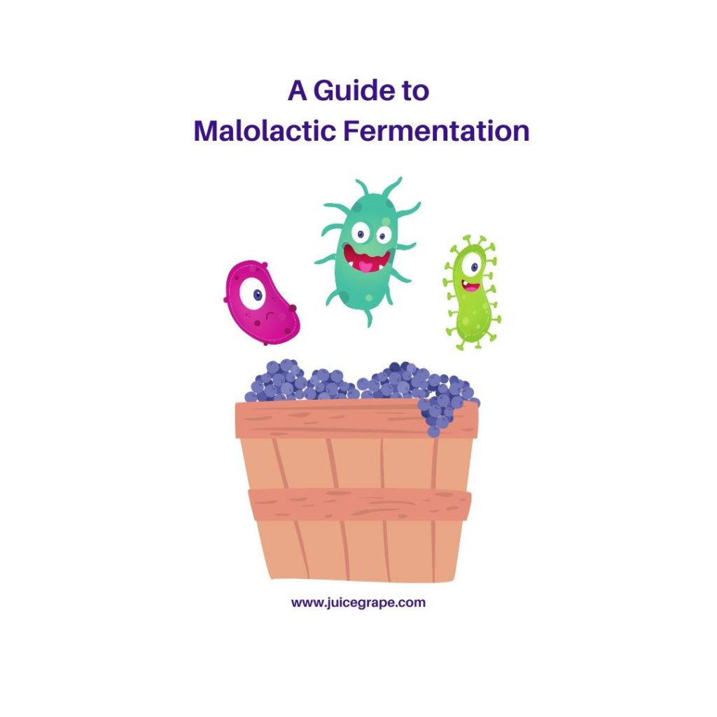 A Guide to Malolactic Fermentation